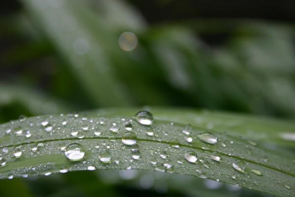 Aprés la pluie